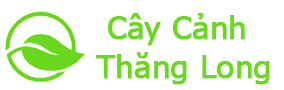 Cây Cảnh Thăng Long
